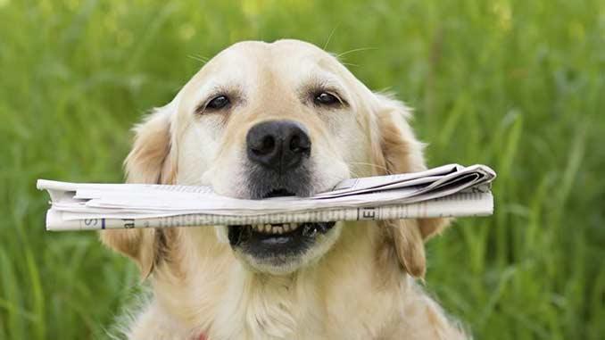 Un perro con un periódico en la boca